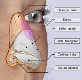 rinoplastica-05-anatomia-m